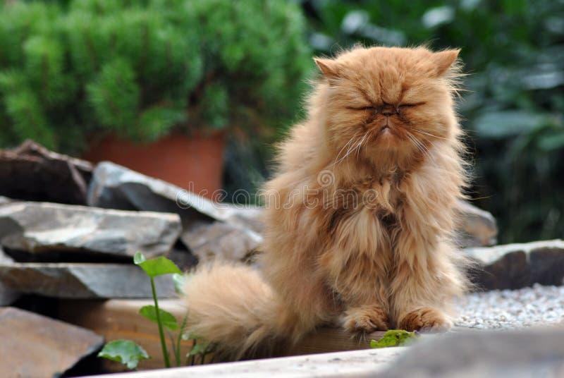 Rött sammanträde och sova för katt royaltyfri fotografi