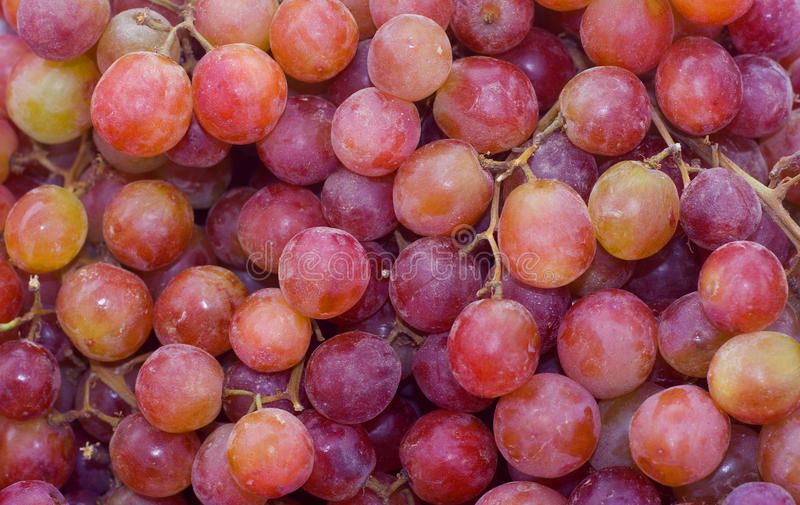 rött seedless för druvor royaltyfri fotografi