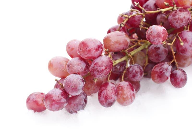rött seedless för druvor royaltyfria bilder