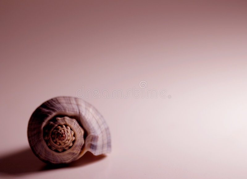 Download Rött skal arkivfoto. Bild av conch, skal, seashore, spiral - 37140