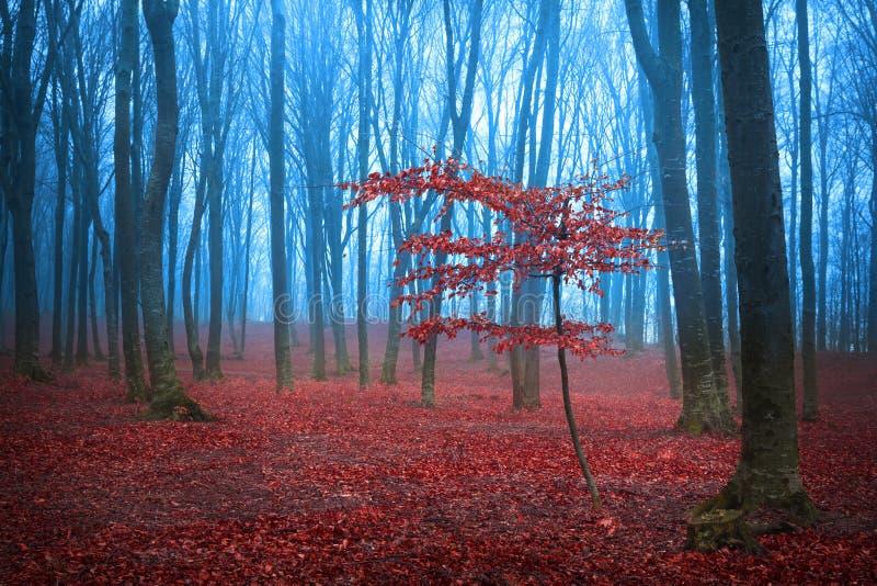 Rött träd för mystiker i en dimmig skog royaltyfria bilder
