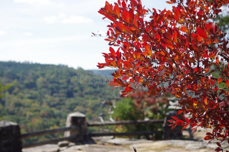 Rött träd i höst arkivfoton