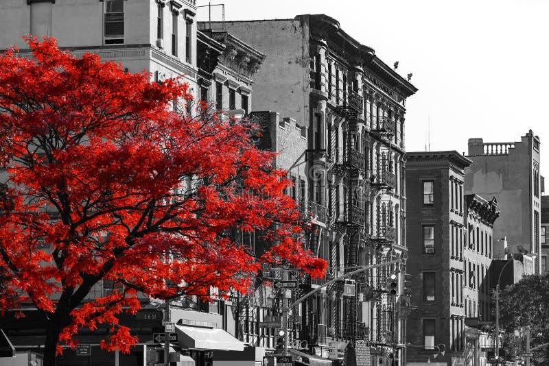 Rött träd på den svartvita New York City gatan royaltyfria foton