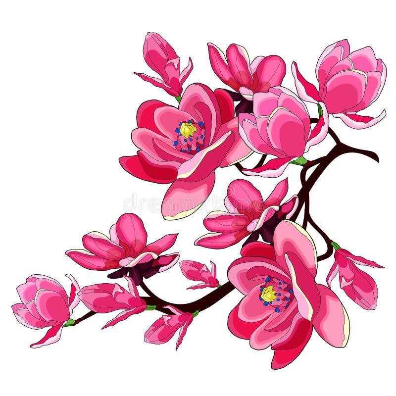Rött trädgårds- dekorativt för filialmagnoliablomma Vektor Illustratio royaltyfri illustrationer