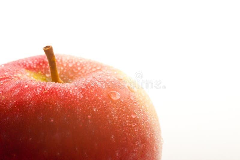 Rött vått äpple med den stora lilla droppen royaltyfri foto