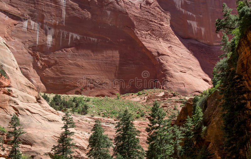 Rött vagga den Kolob kanjonen Zion National Park 13 arkivfoton
