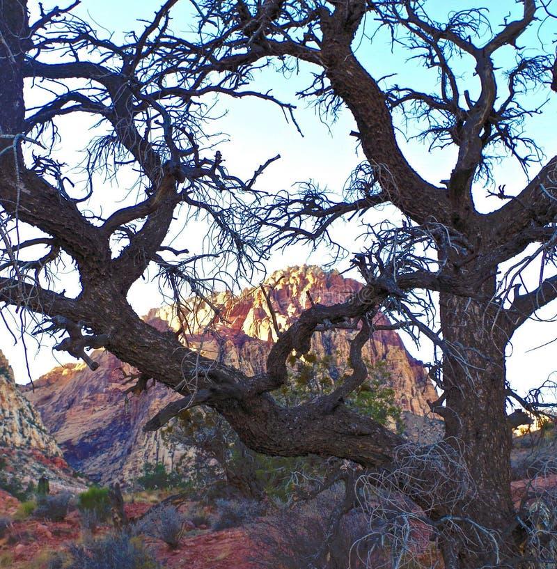 Rött vagga kanjonnationalparken, Nevada royaltyfri bild