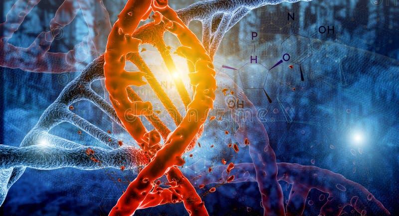 Rött vertikalt DNAkedjeslut upp med blåa kemiska formler på förgrund Begrepp av forskning royaltyfri fotografi