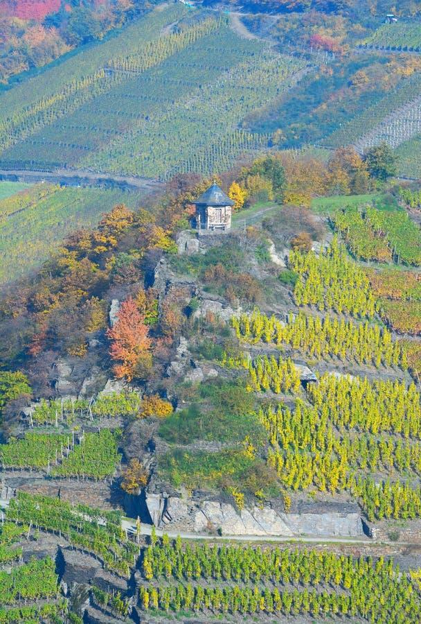 Rött vin som fotvandrar slingan, Ahr, Rheinland-Pfalz, Tyskland royaltyfri fotografi