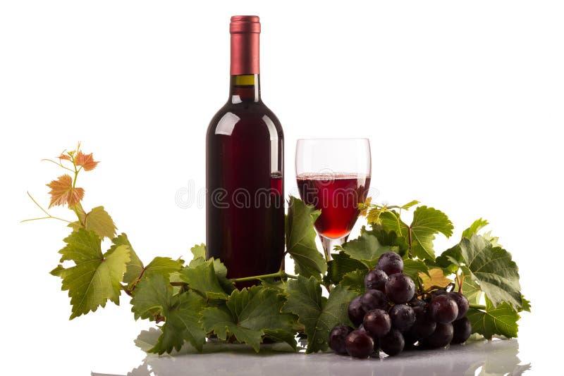 Rött vinflaska och exponeringsglas med druvor och sidor på vit bakgrund royaltyfria foton