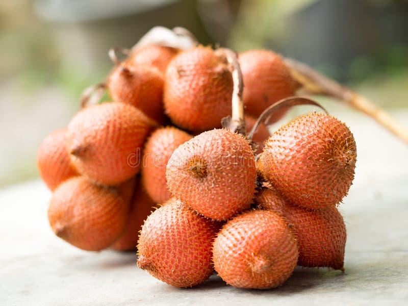 Rött wintergreen frukt, eller den Salacca wallichianaen eller den Salacca zalaccaen är lokal traditionell thailändsk frukt royaltyfri foto