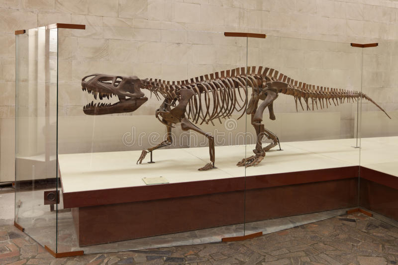 Download Chiniquensis Huene De Prestosuchus Fotografia Editorial - Imagem de predator, moscow: 29837557