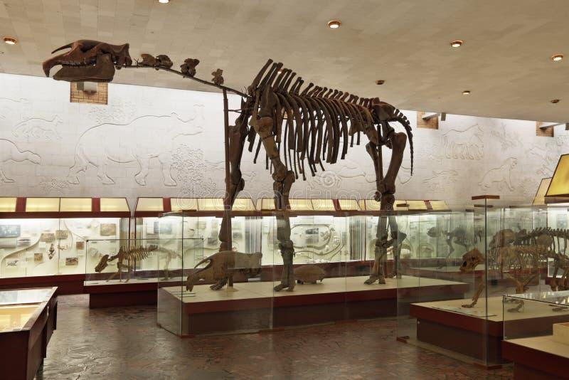 Download O Esqueleto De Um Indricotherium Imagem de Stock Editorial - Imagem de dinosaur, fauna: 29836114