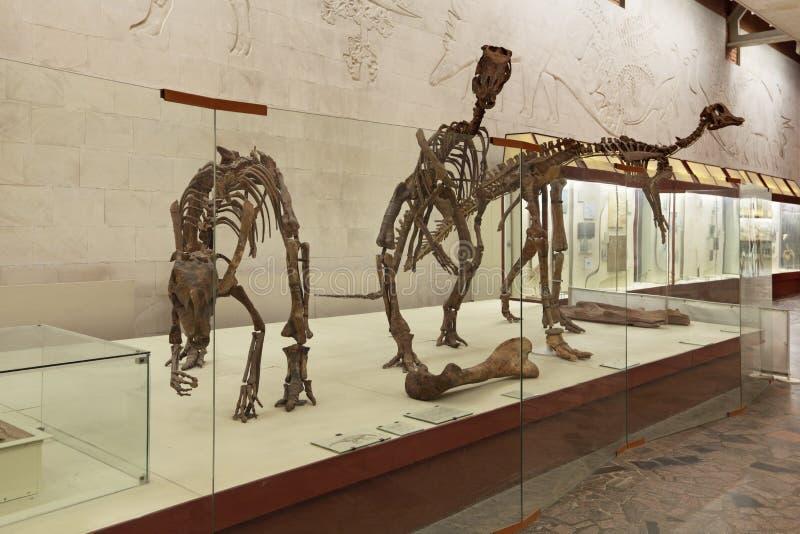 Esqueletos do dinossauro foto de stock royalty free