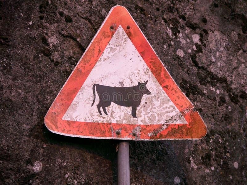 Rústico, gastado, señal de peligro con la imagen de la vaca/del ganado, contra una pared de piedra áspera fotografía de archivo libre de regalías