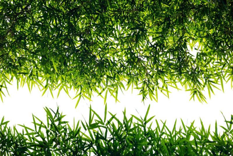 Rücklichtbambusblätter stockbild