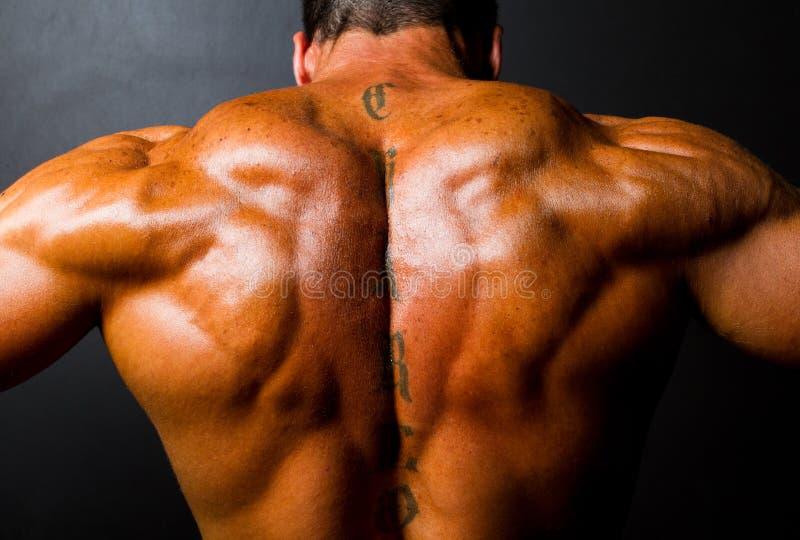 Rückseite des muskulösen Bodybuilders lizenzfreie stockbilder