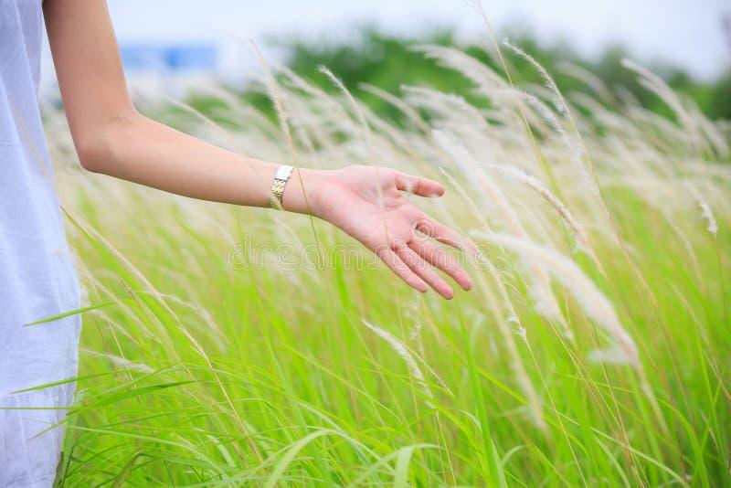 Rührendes grünes Gras der Frau Hand stockfotografie