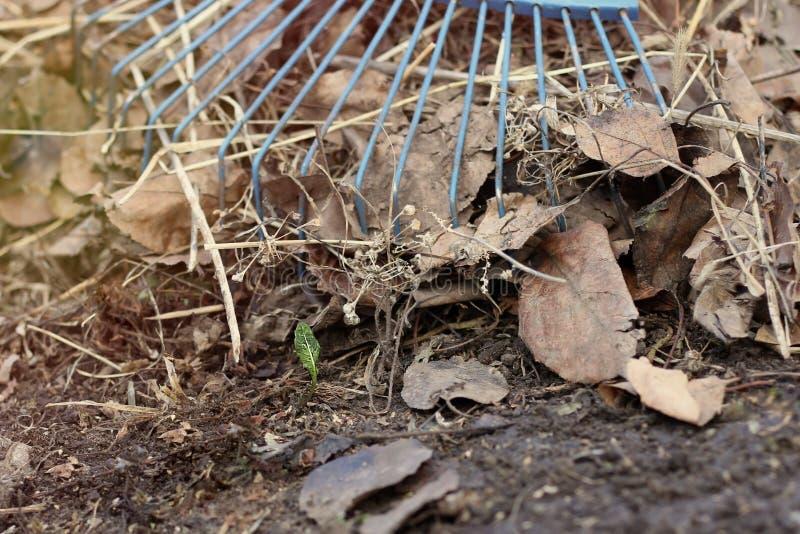 Rührstange auf einem Stapel des neuen Grassprösslings des gelben Herbstlaubs stockfotografie