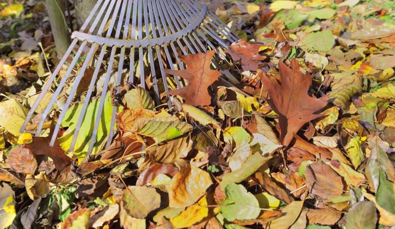 Rührstange in einem Stapel von herbstlichen Blättern in einem Garten stockfotos