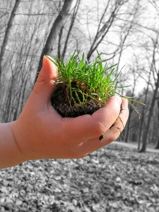 Download Ręce życia zdjęcie stock. Obraz złożonej z rośliny, ziemia - 143980