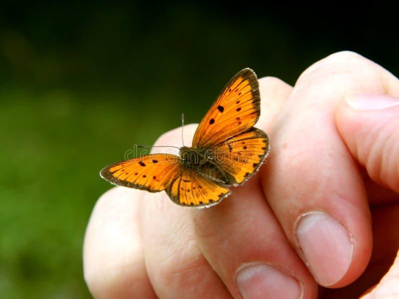 ręce motylia ludzkiej pomarańcze zdjęcia stock