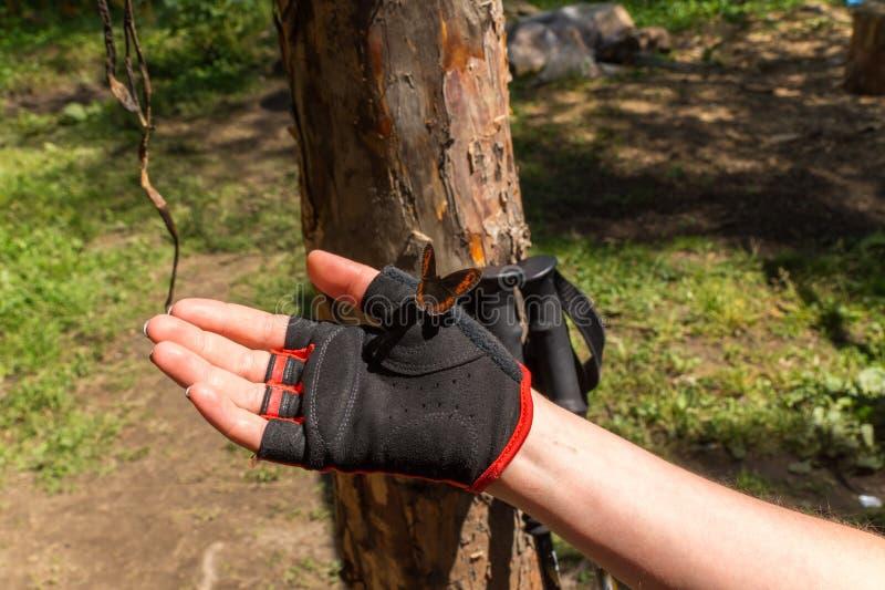 ręce motylia ludzkiej pomarańcze zdjęcie stock