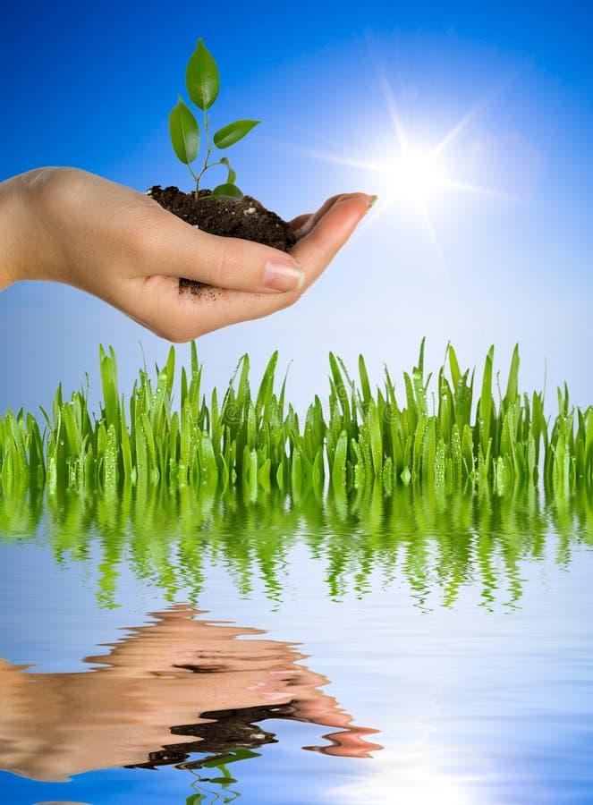 ręce roślinnych zdjęcie royalty free