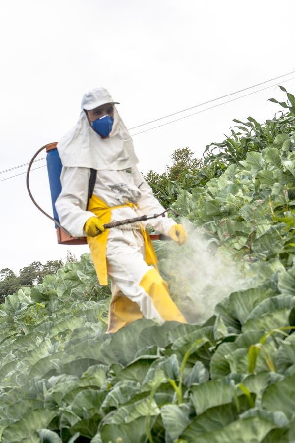 Ręczna pestycyd natryskownica w sałacie fotografia stock