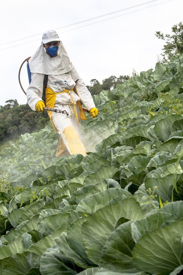 Ręczna pestycyd natryskownica w sałacie obrazy stock