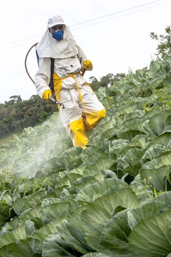 Ręczna pestycyd natryskownica w sałacie zdjęcia royalty free