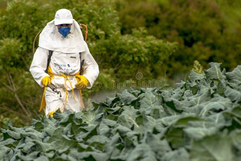 Ręczna pestycyd natryskownica w sałacie obrazy royalty free