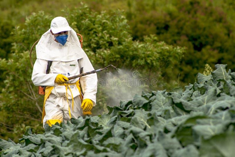 Ręczna pestycyd natryskownica w sałacie zdjęcie royalty free