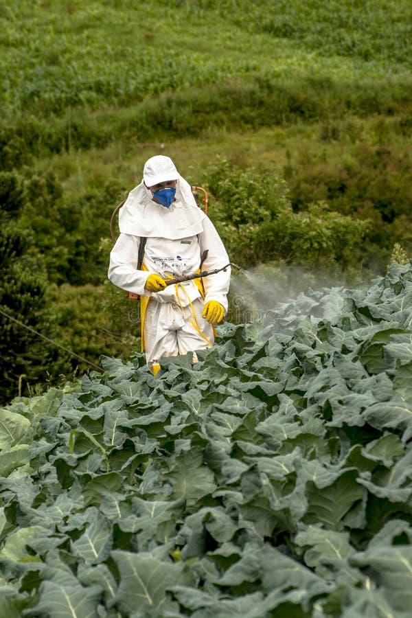Ręczna pestycyd natryskownica w sałacie zdjęcie stock