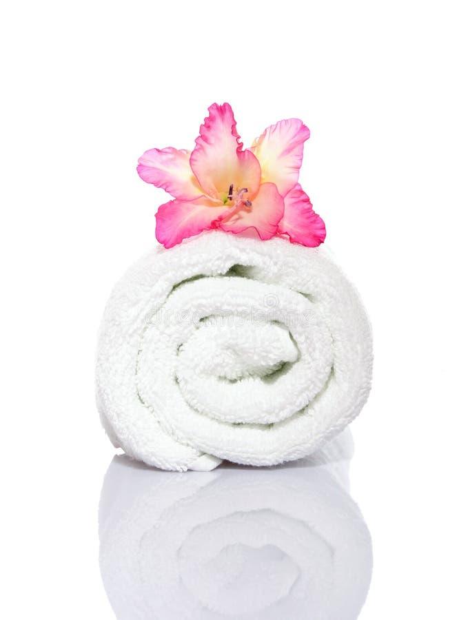 ręcznik gladiola zdjęcia royalty free