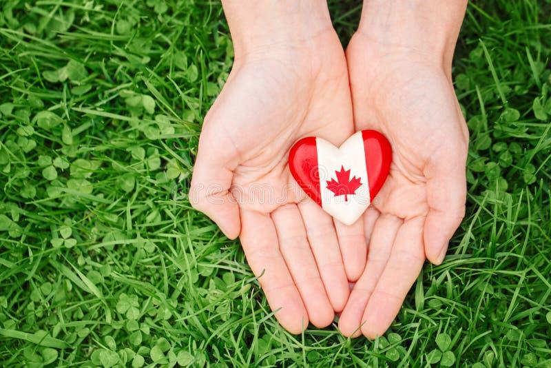 Ręk palmy trzyma wokoło odznaki z czerwonym białym kanadyjczyk flaga liściem klonowym na zielonej trawy natury lasowym tle, Kanad zdjęcie stock