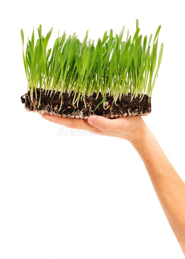ręk rośliny obrazy royalty free