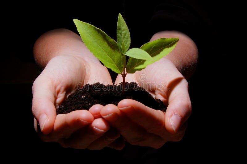 ręk rośliny ziemi potomstwa zdjęcie royalty free