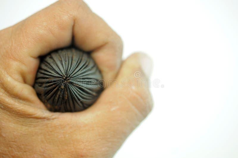 Ręka chwyci palm ziarna na białym tle obrazy stock