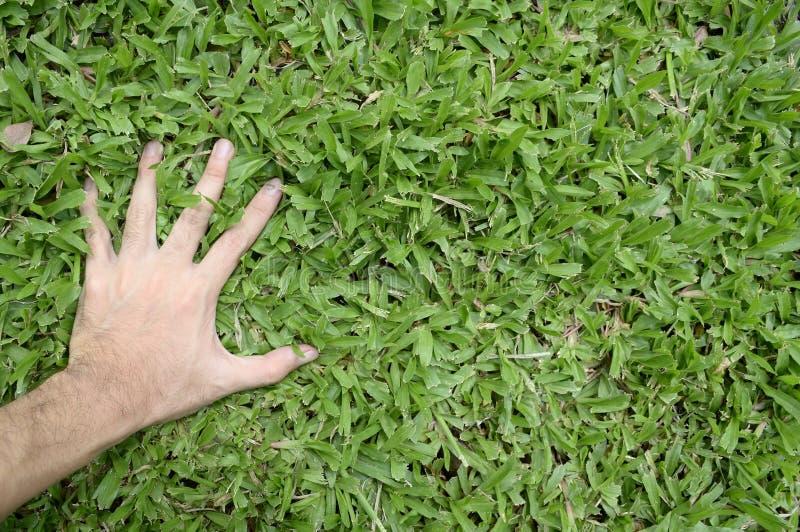 Ręka dotyka zielonej trawy pole zdjęcia stock