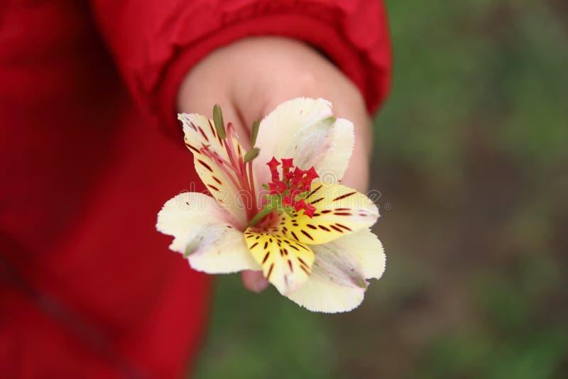 Ręka dzieciak z kwiatem zdjęcie stock