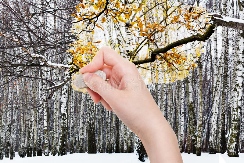 Ręka kasuje zima las gumową gumką zdjęcie stock