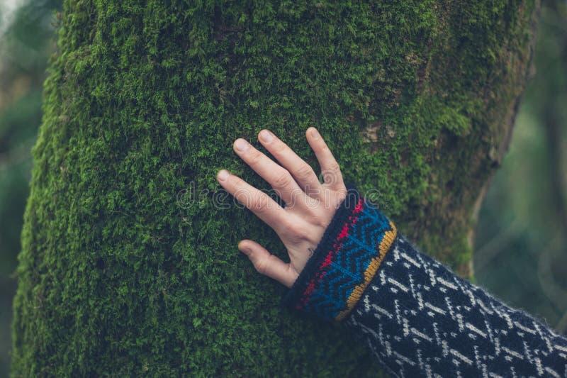 Ręka kobieta na drzewie z mech obraz stock