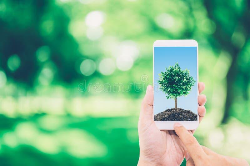 Ręka mężczyzna mienia telefon komórkowy z ziemią i drzewo na ekranie fotografia stock