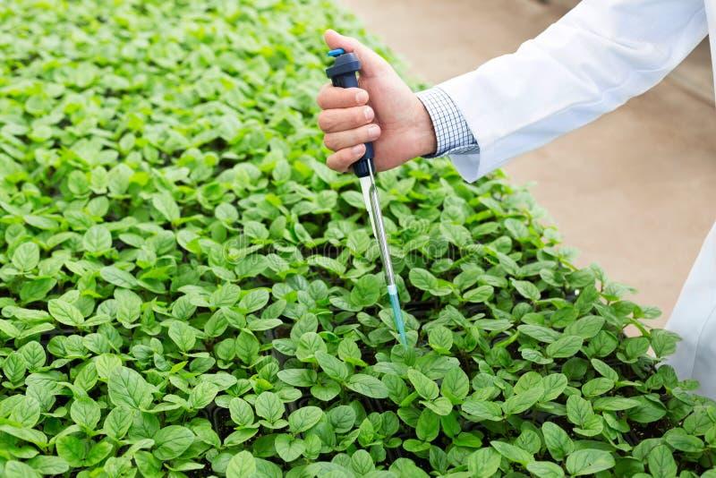 Ręka męski biochemik używa pipetę na rozsadach w rośliny pepinierze zdjęcia royalty free