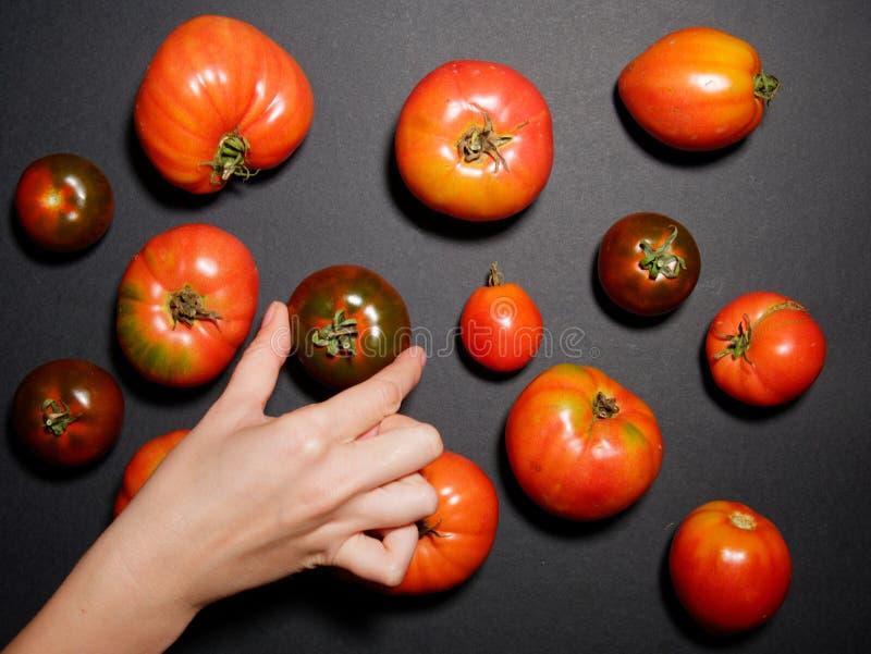 Ręka młoda kobieta trzyma świeżego pomidoru Odgórny widok zdjęcie royalty free
