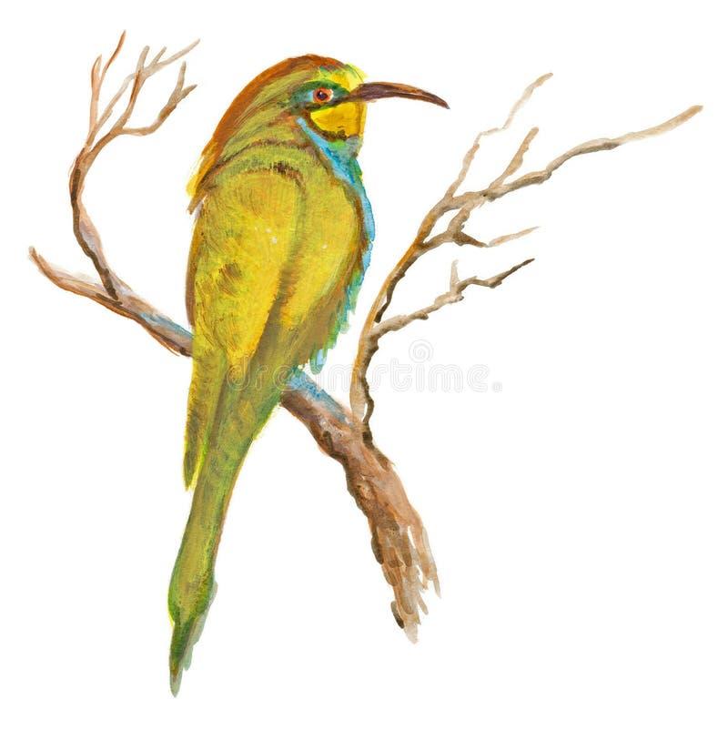 Ręka malował ilustrację na bielu - ptak, Europejski zjadacz ilustracja wektor