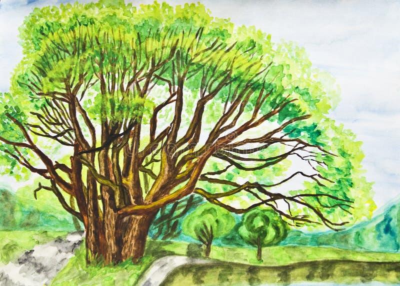 ręka malująca obrazka drzewa wierzba royalty ilustracja