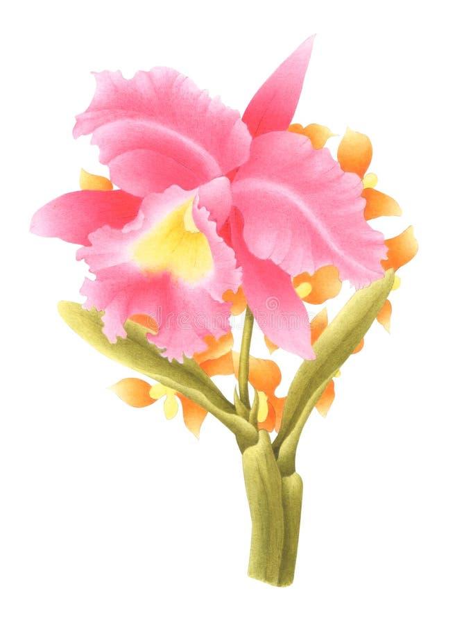 Ręka Malujący akwarela kwiat Akwarela storczykowy bukiet odizolowywający na białym tle Z ścinek ścieżką zawierać ilustracja ilustracji