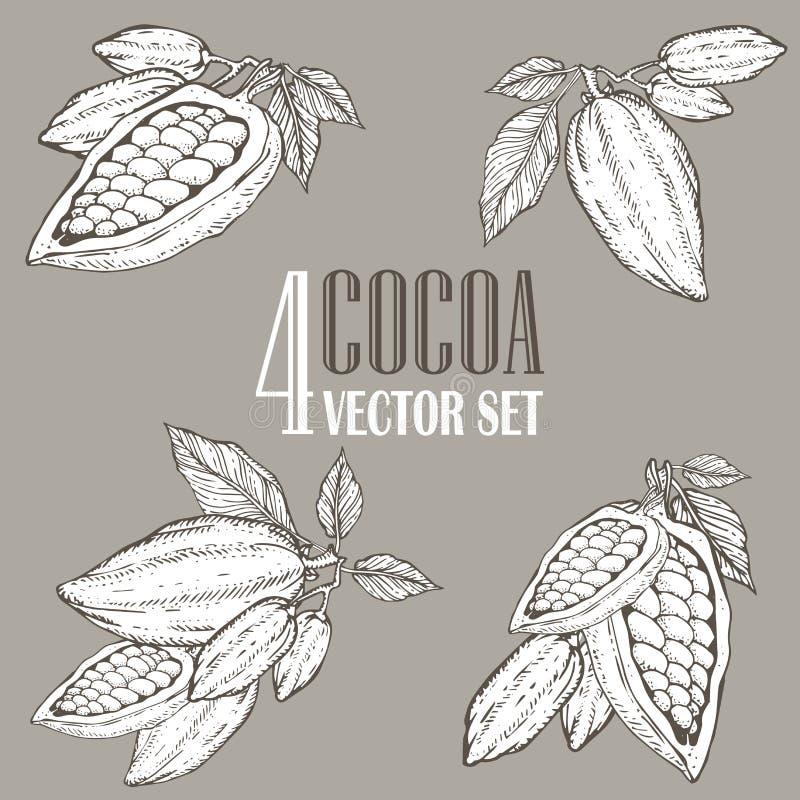 Ręka malujący kakaowy botaniki ilustraci set Dekoracyjni doodles zdrowy odżywki jedzenie ilustracji